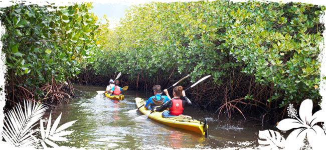 Nature & Eco-Tours on the Space Coast